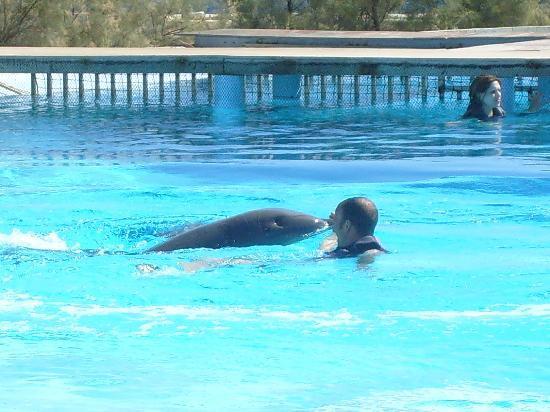 slimiza suites bagno con i delfini mediterraneo marine park