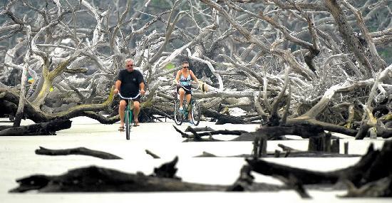 Jekyll Island Ga Biking On Driftwood Beach