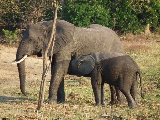 Liwonde National Park, Malawi: Mother and baby