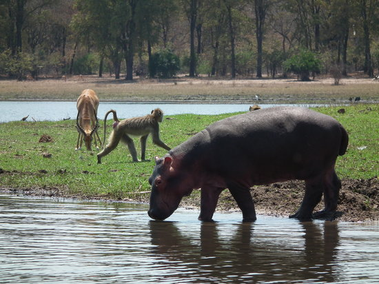 Liwonde National Park, Malawi: On safari