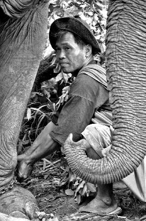 Boon Lott's Elephant Sanctuary : Mahout and elephant