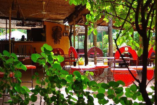 Hotel les Palmiers: tonnelle
