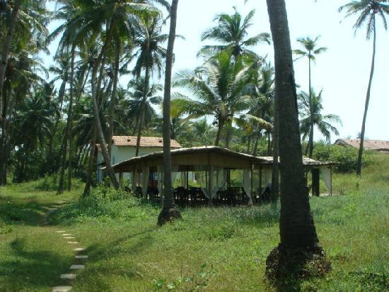 Elsewhere - The Beach Houses : The restaurant