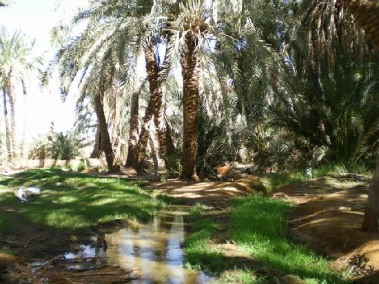 Old Bawiti: 温泉が湧いていてヤシの林に流れています