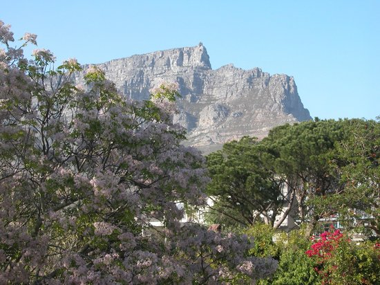 Lionscape B&B: View from my room on Table Mountain. What a great view to wake up to.