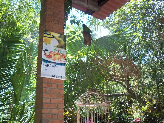 Vallarta Tours: Nogolita for lunch