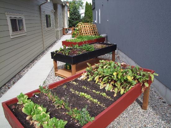 Ogopogo B & B: Elevated garden growing fresh veggies used for breakfasts