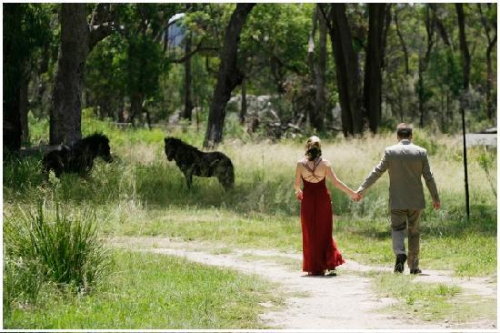 Diamondvale Cottages: Enjoy our wonderful surroundings - peaceful bushland, yet so close to town