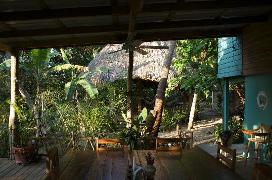 Iguana Junction: Breakfast area and hammock palapa