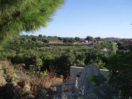 Casa Vale del Rei : view across the orange groves