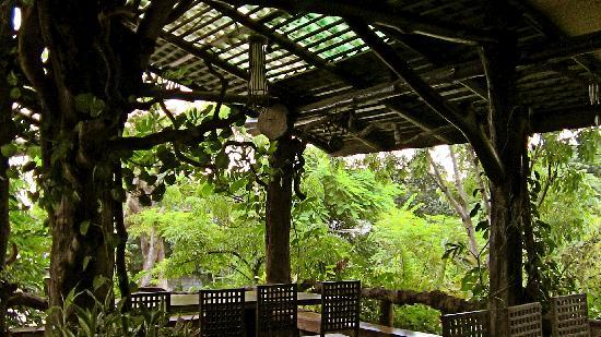 The Forest Resort & Spa: Dining area with lovely jungle in the city!