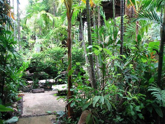 The Forest Resort & Spa: Lush outside our room