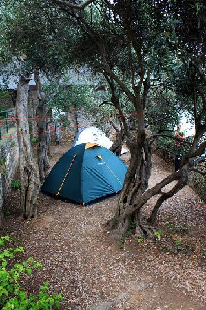Camping Maralunga : Our emplacement