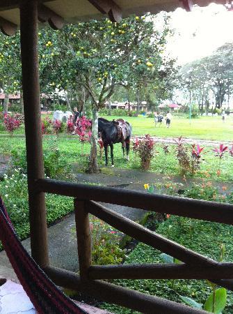 Hotel y Finca Las Glorias: Just outside my room