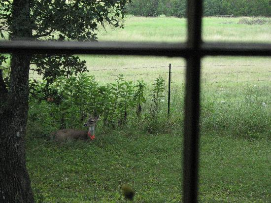 The Bed and Breakfast on Knopp School Road: deer outside window