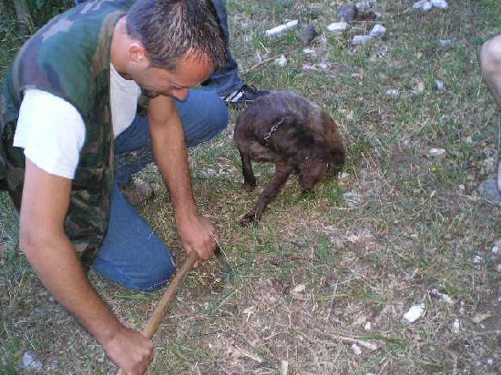 Agriturismo Bartoli : The Truffle hunt