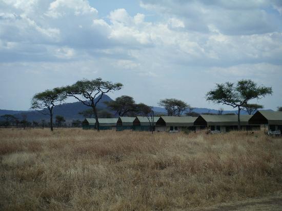 Serengeti Medium Camp: tents