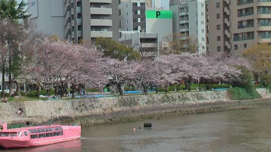 Hiroshima Fredsmindesmærke-museet: Blossoms along one of the seven rivers in Hiroshima