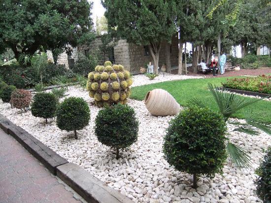 Ramat Rachel Resort: Look on this unusual pretty plant