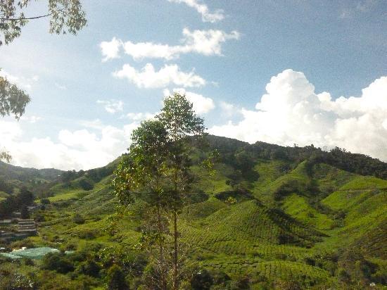 Tanah Rata, Malesia: tea farm