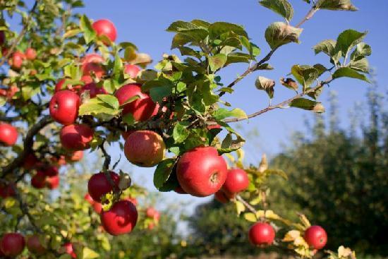 Agriturismo Jolly : il frutteto
