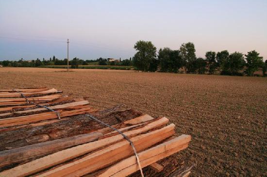 Agriturismo Jolly : la campagna vicino