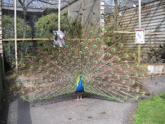 Nightingails: At Exmoor Zoo