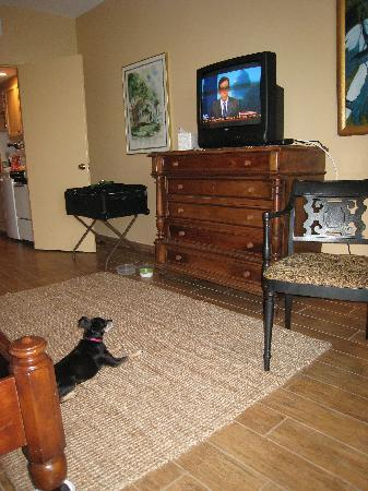 The Club Continental Suites: Our doggie made herself right at home.