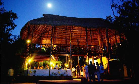 Jolie Jungle : Club house