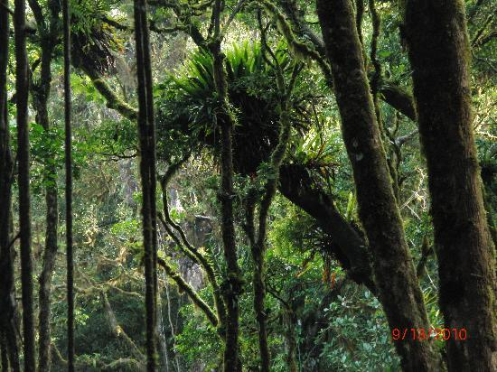Monteverde Cloud Forest Reserve, คอสตาริกา: entering the cloud forest reserve