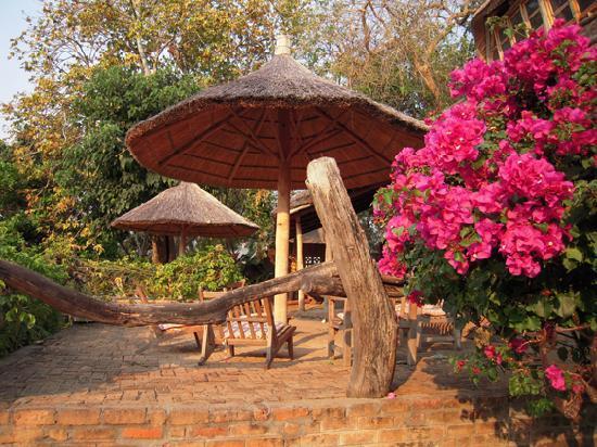 Ngala Beach Lodge : Tropical gardens and rustic luxury