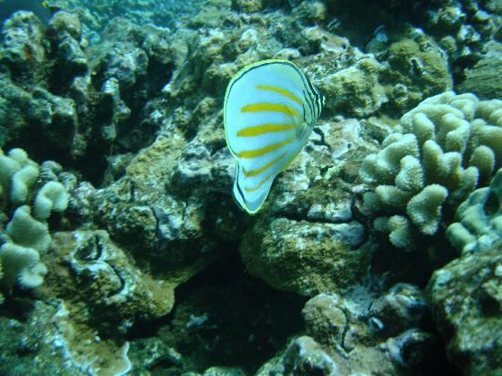 Hawaii Ocean Rafting : tropical fish