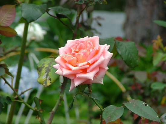 Dalat Flower Park : Flowers in Dalat