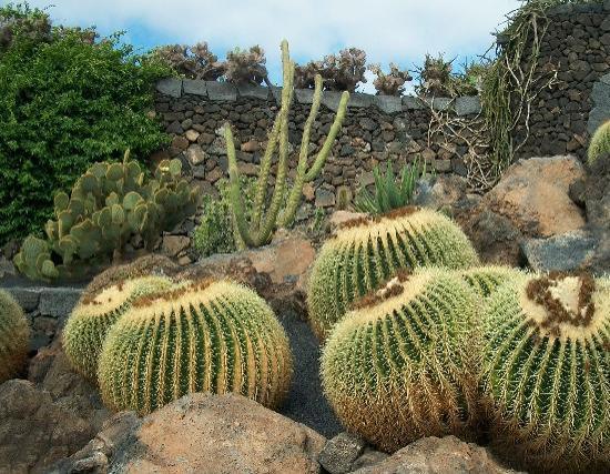 Lanzarote, Spain: Jardin des cactus