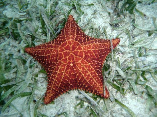 Cushion Sea Star Picture Of Infinity Bay Spa And Beach