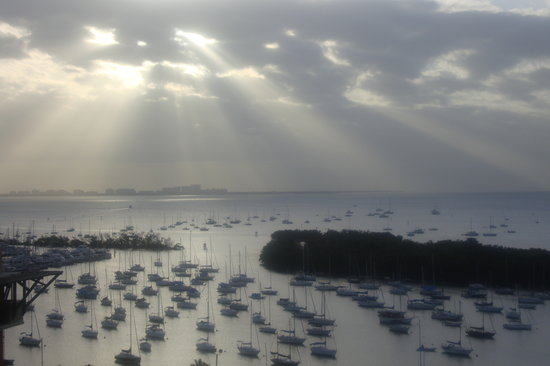 Sonesta Coconut Grove Miami: View from Room