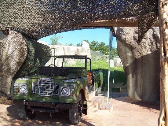 Dallas Zoo: cheetah exhibit