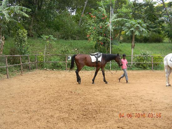 Digana, Sri Lanka: Horse riding