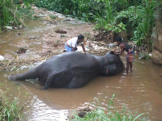 Cinnamon Citadel Kandy: The bathing elephant-hill walk to Kandy
