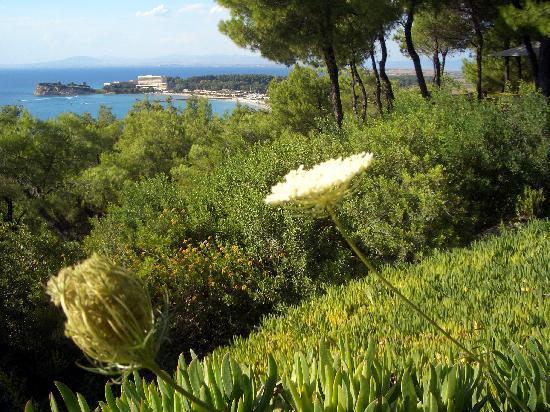 Sani Asterias: Blick aufs Sani-Resort