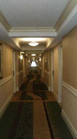 Radisson Hotel Orlando - Lake Buena Vista: Pasillos impecables ,todo perfecto