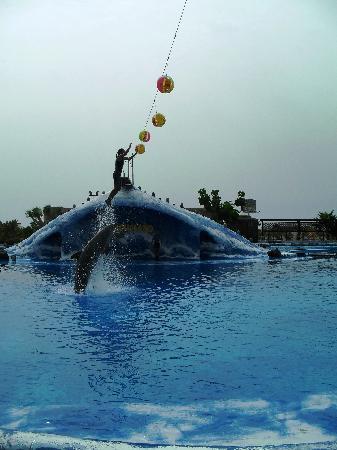 Aqualand Costa Adeje : Dolphin show 2