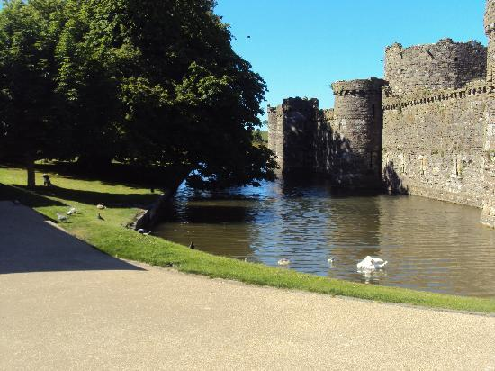 Beaumaris Castle: Castle walls & moat with swans