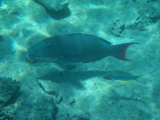 Stella Di Mare Beach Hotel & Spa: Under the sea 2