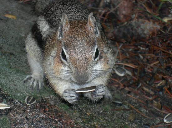 Deer Valley Ranch: Did I mention feeding the chipmunks?