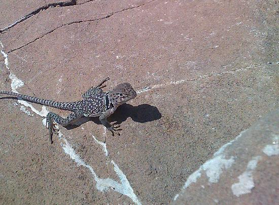 Franklin Mountains State Park: New friend