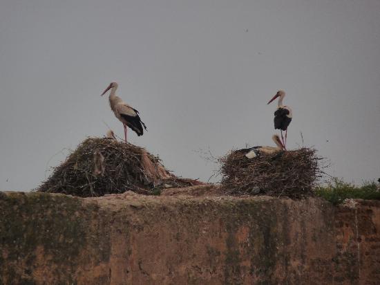 Riad Assalam : Observez les cigognes depuis la terrasse