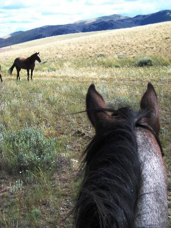 Rocking Z Guest Ranch: Rocking Z Ranch - best place in the world!