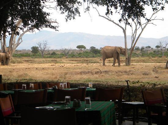 """Donamasai Day Tours: il """"ristorante"""" del nostro campo tendato, con vista sugli elefanti..."""