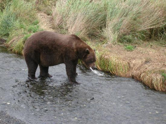 Alaska's Kodiak Island Resort: Bear viewing